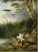 Philip Reinagle Harrier Killing a Bittern painting